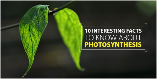10 Interesting Facts To Know About Photosynthesis
