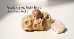 fossils are not bones
